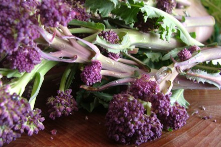 purple-sprouting-broccoli-pasta3