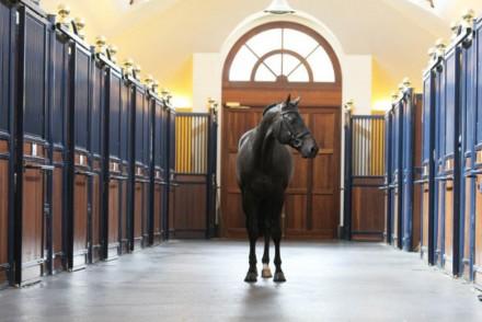 Gucci Equestrian horse